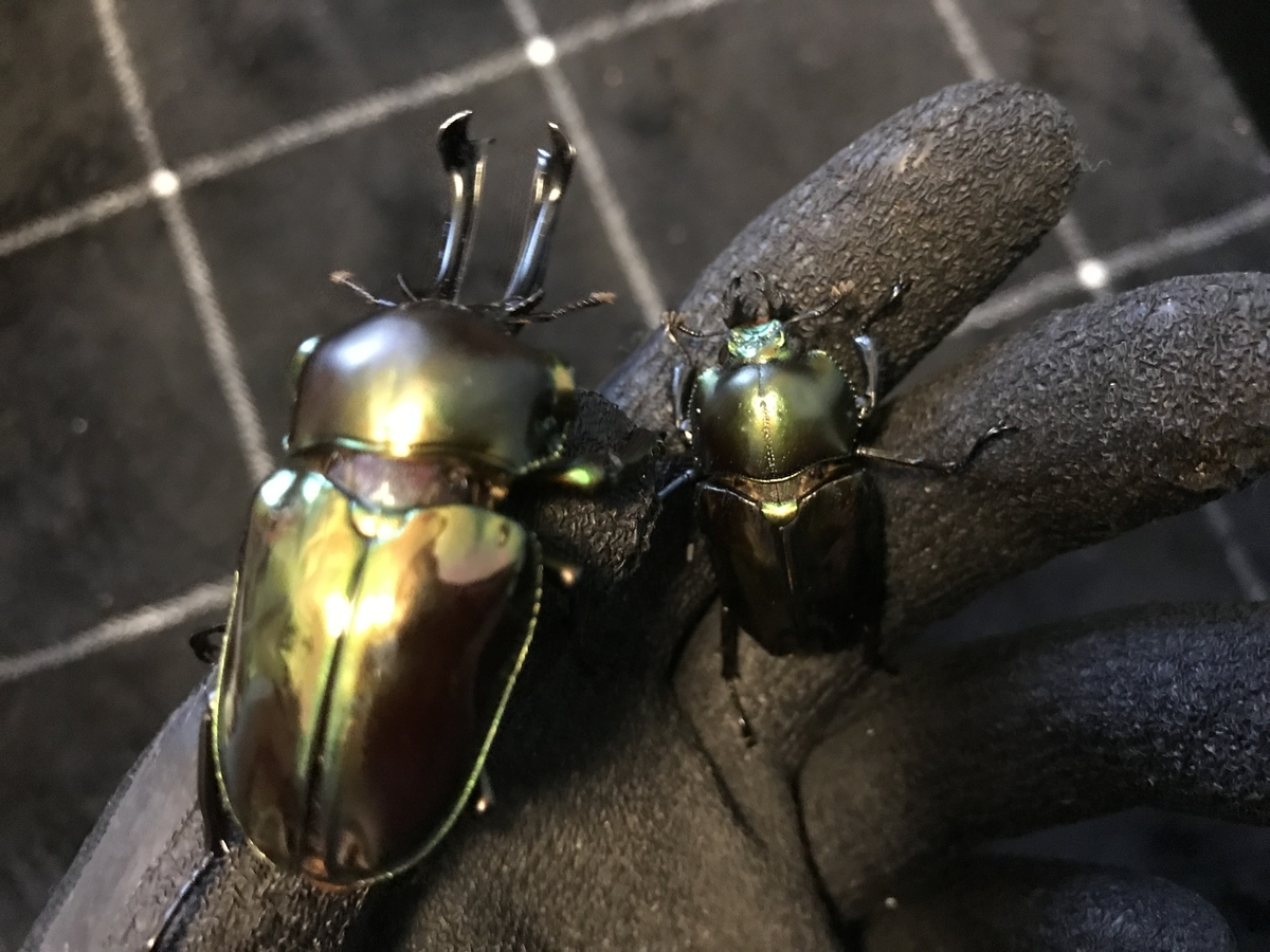 f:id:youwanna-beetles:20190604183515j:plain