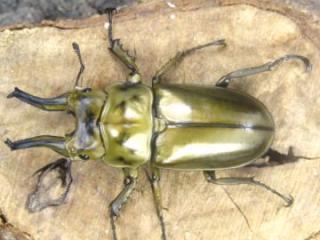 f:id:youwanna-beetles:20190625133752j:plain