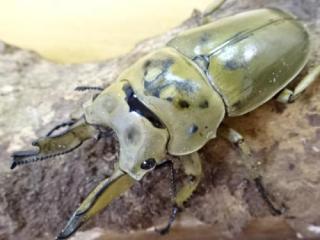 f:id:youwanna-beetles:20190627151441j:plain