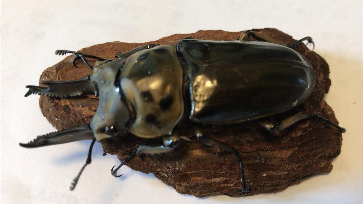 f:id:youwanna-beetles:20190630141529p:plain