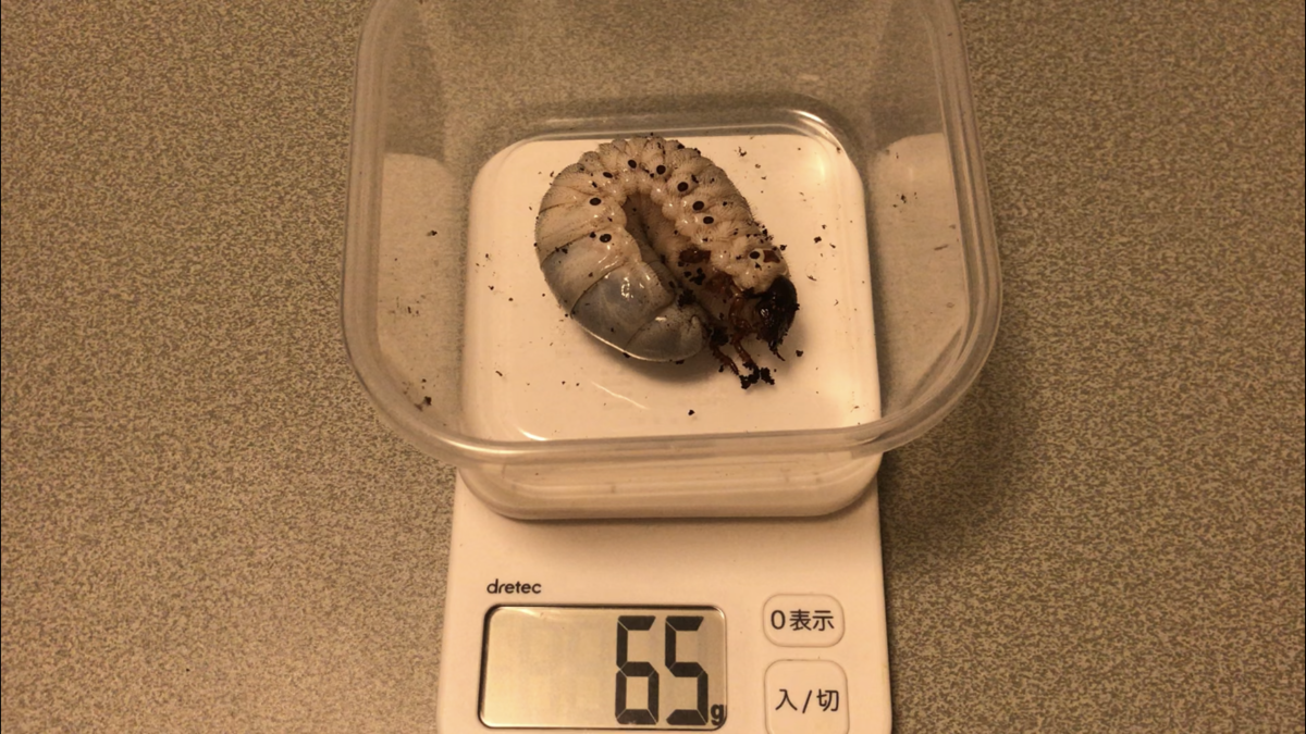 f:id:youwanna-beetles:20190707203152p:plain