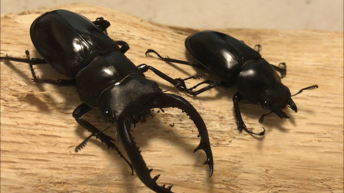 f:id:youwanna-beetles:20190728010237p:plain