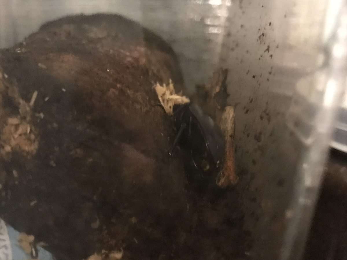 f:id:youwanna-beetles:20190810180325j:plain