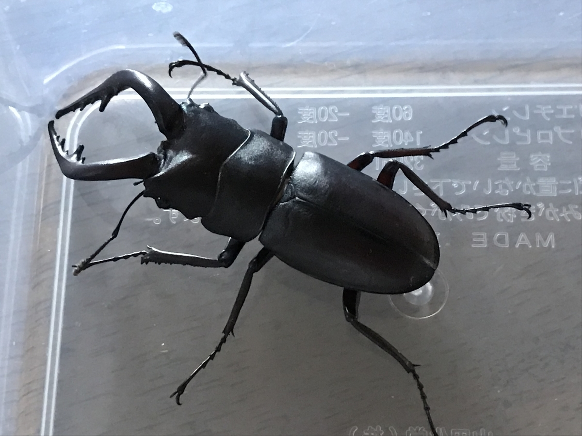 f:id:youwanna-beetles:20190816175917j:plain
