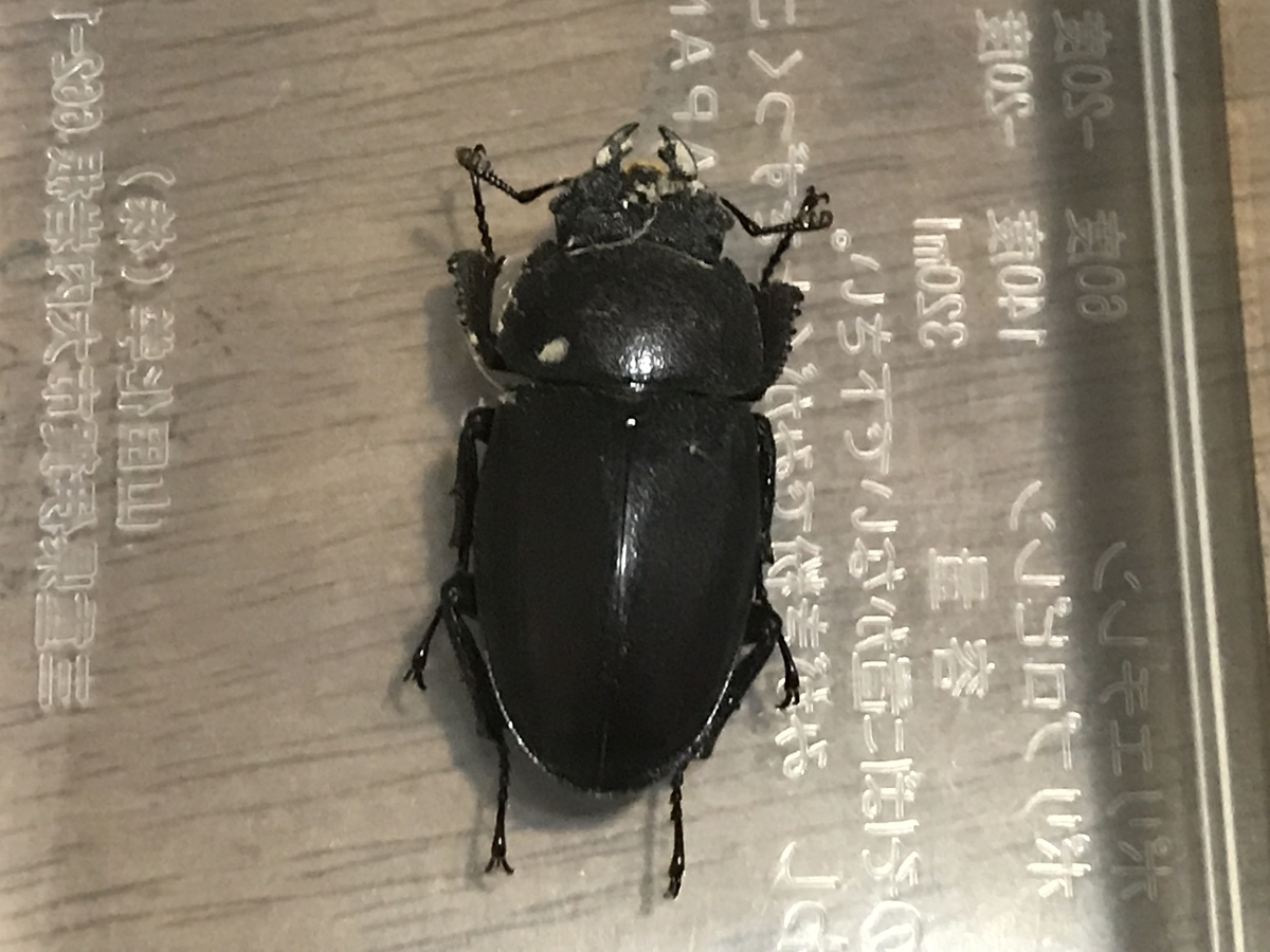 f:id:youwanna-beetles:20190818093713j:plain
