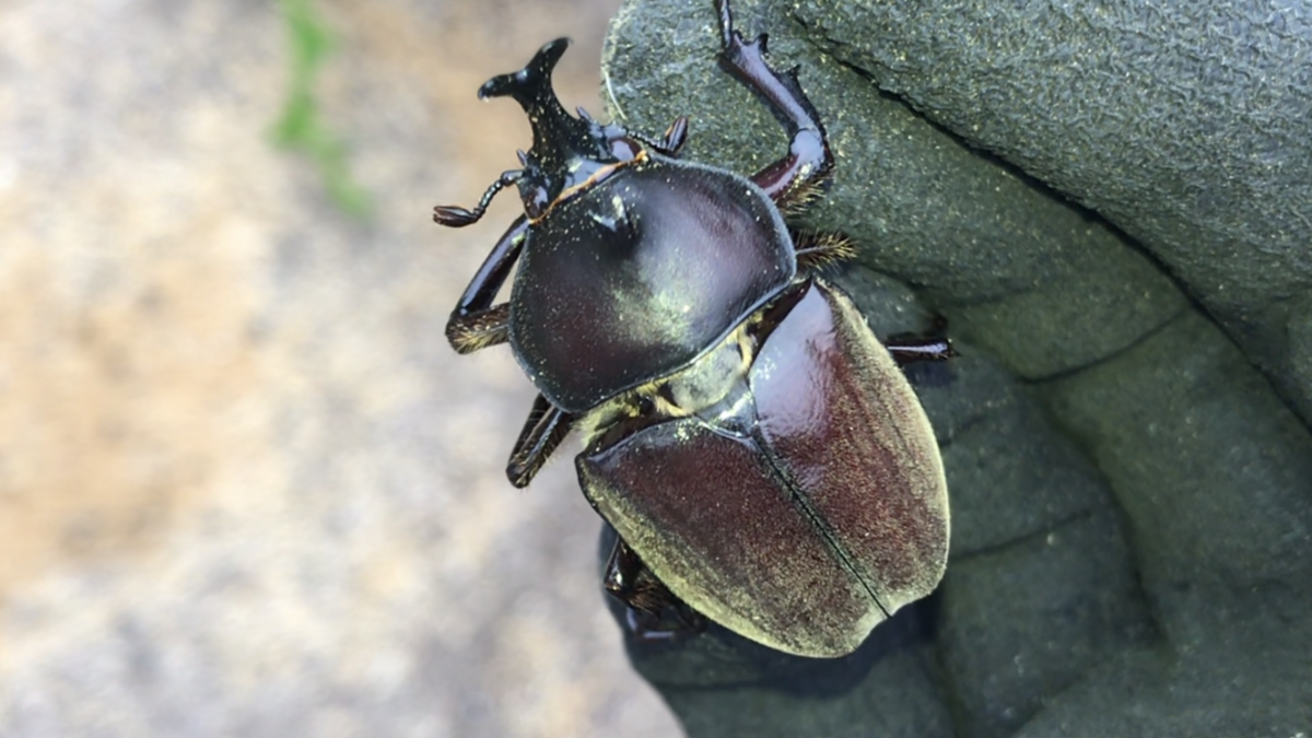 f:id:youwanna-beetles:20190831145827p:plain