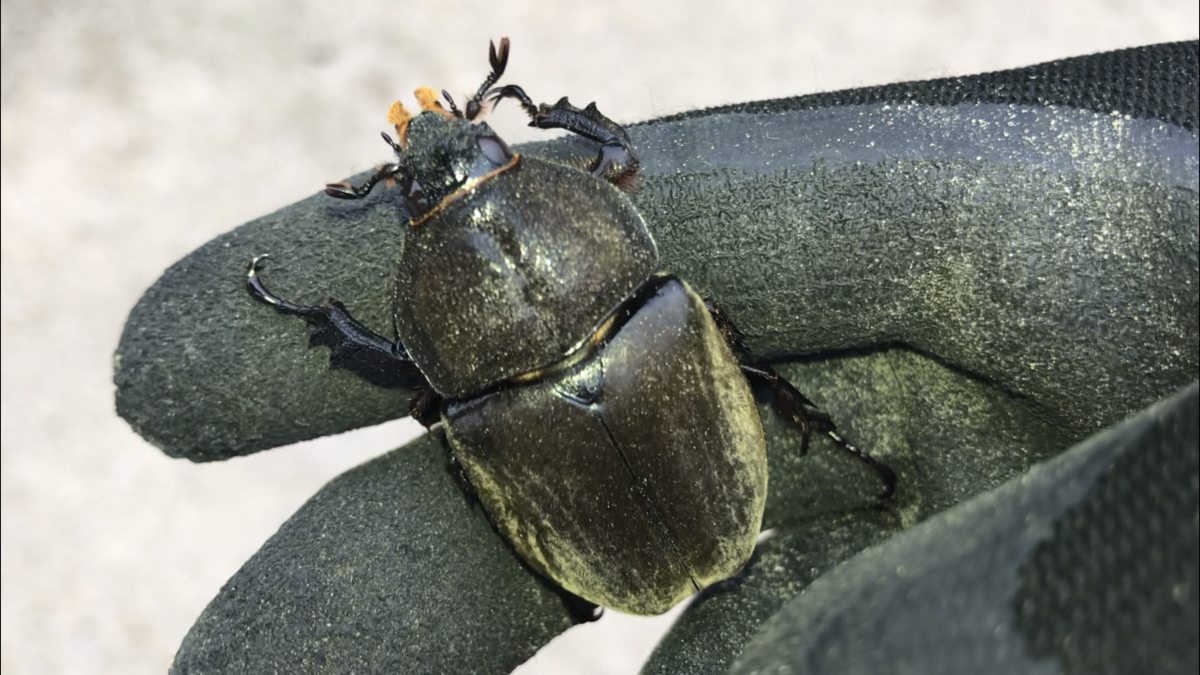 f:id:youwanna-beetles:20190831145836p:plain