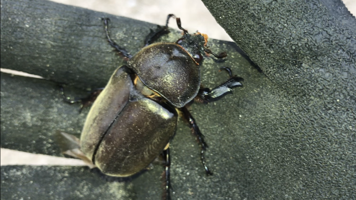 f:id:youwanna-beetles:20190831150313p:plain