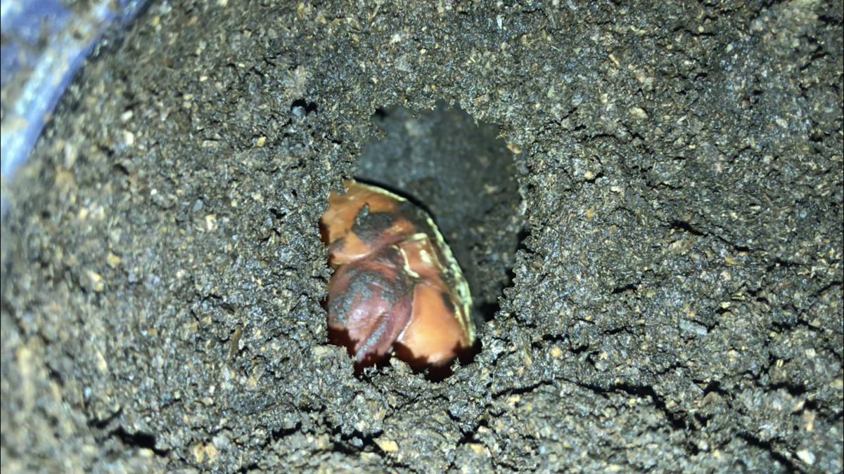 f:id:youwanna-beetles:20190911162021p:plain