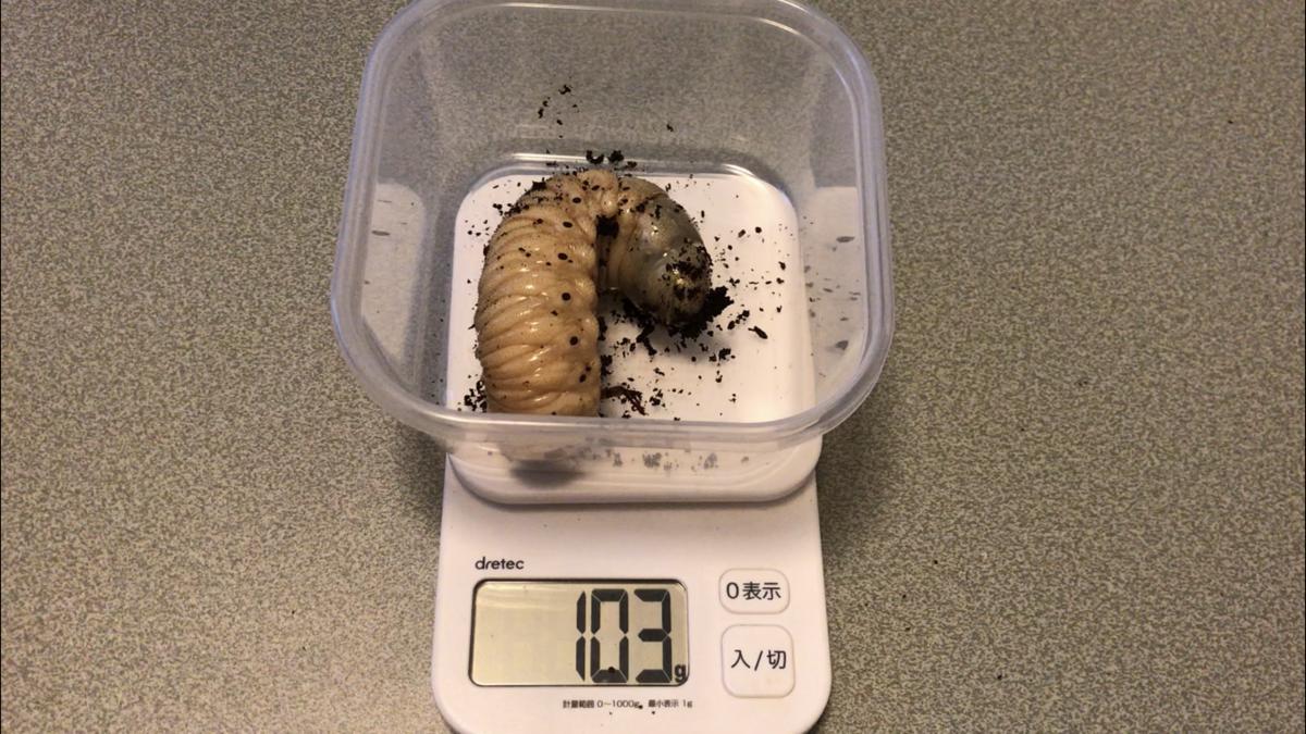 f:id:youwanna-beetles:20190919170444p:plain