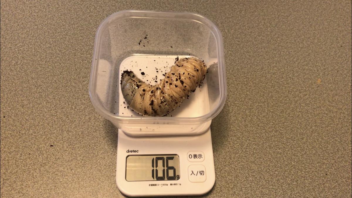 f:id:youwanna-beetles:20190919170517p:plain