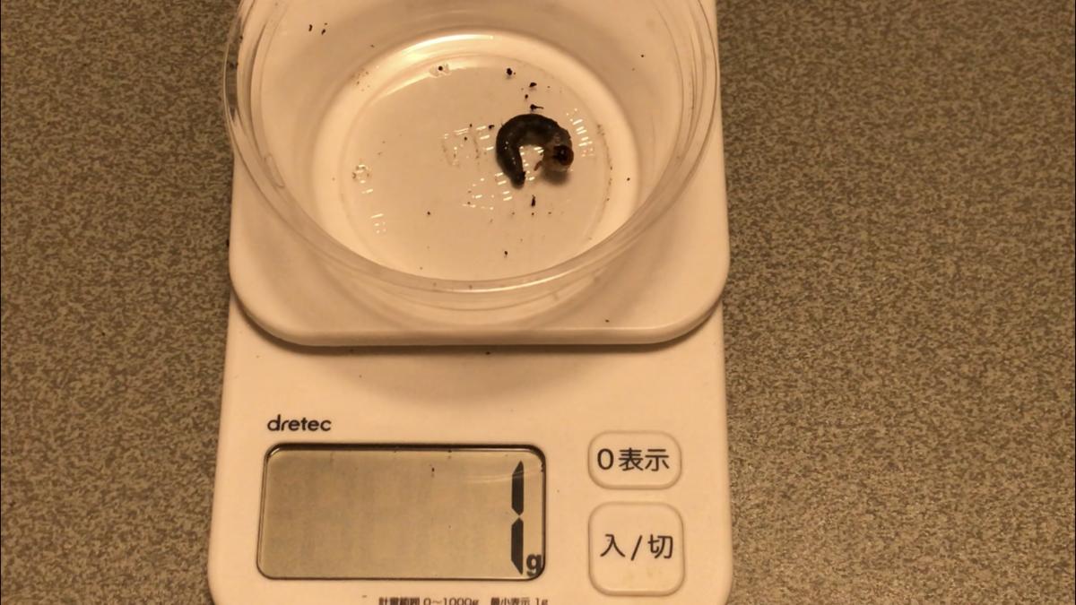 f:id:youwanna-beetles:20191010174114p:plain
