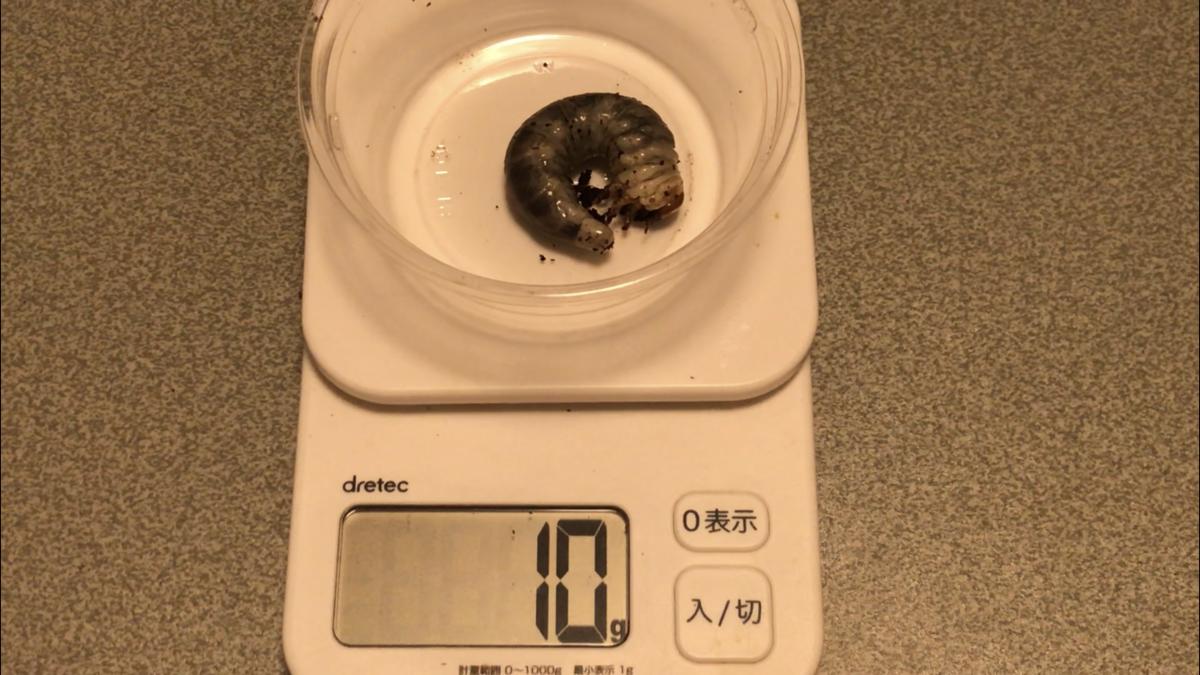 f:id:youwanna-beetles:20191010174901p:plain