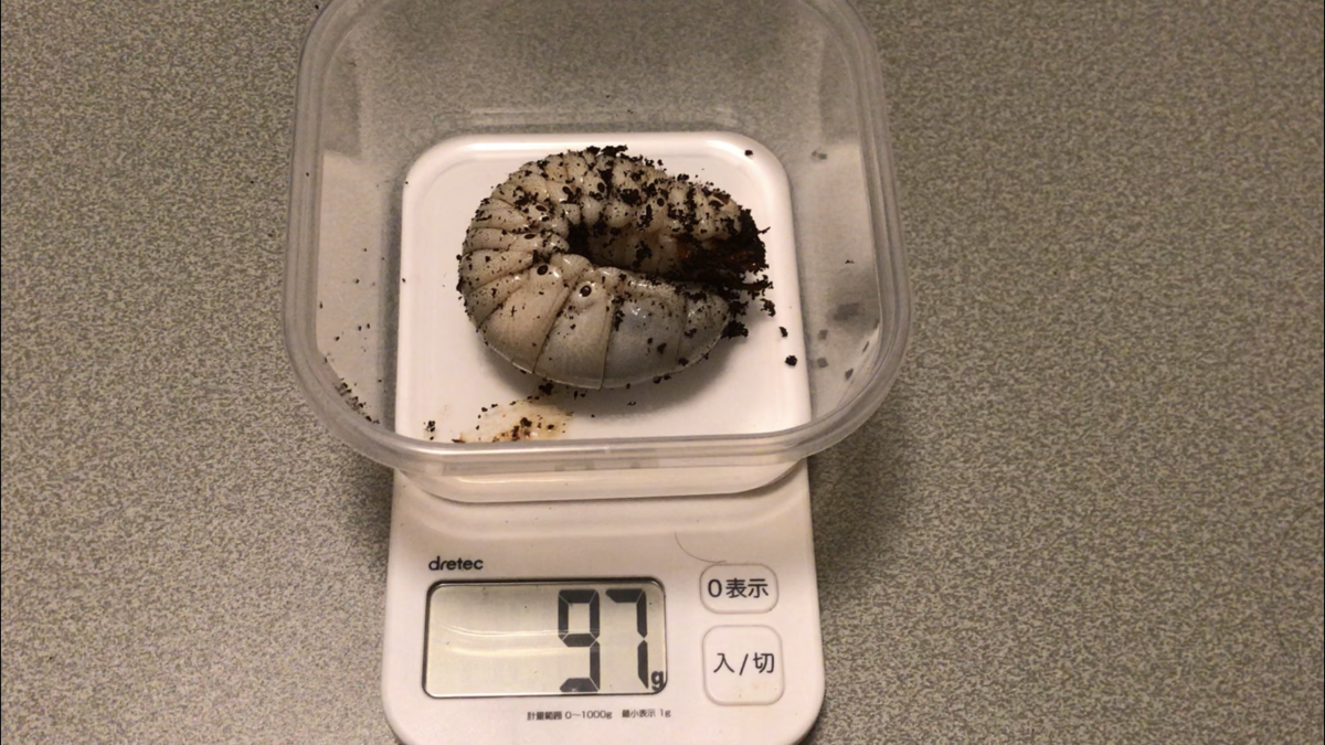 f:id:youwanna-beetles:20191012143241p:plain
