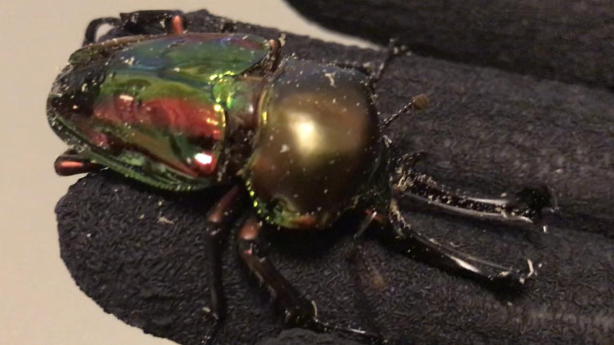 f:id:youwanna-beetles:20191022173818p:plain