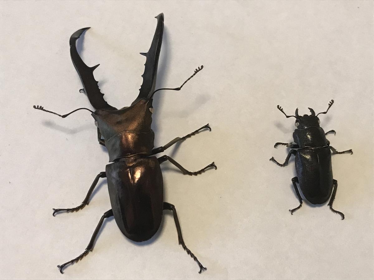 f:id:youwanna-beetles:20191022173918j:plain