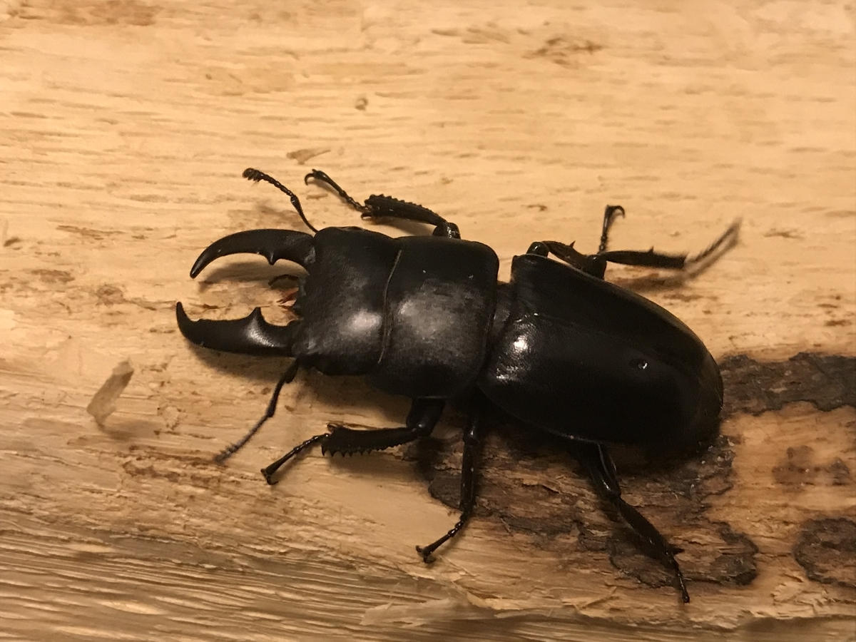 f:id:youwanna-beetles:20191027173646j:plain