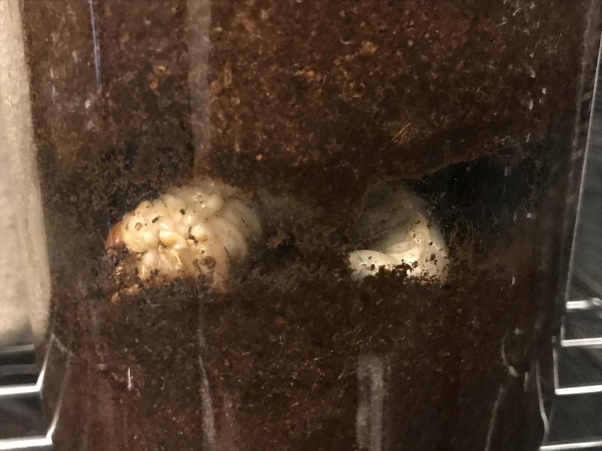 f:id:youwanna-beetles:20191107171816j:plain