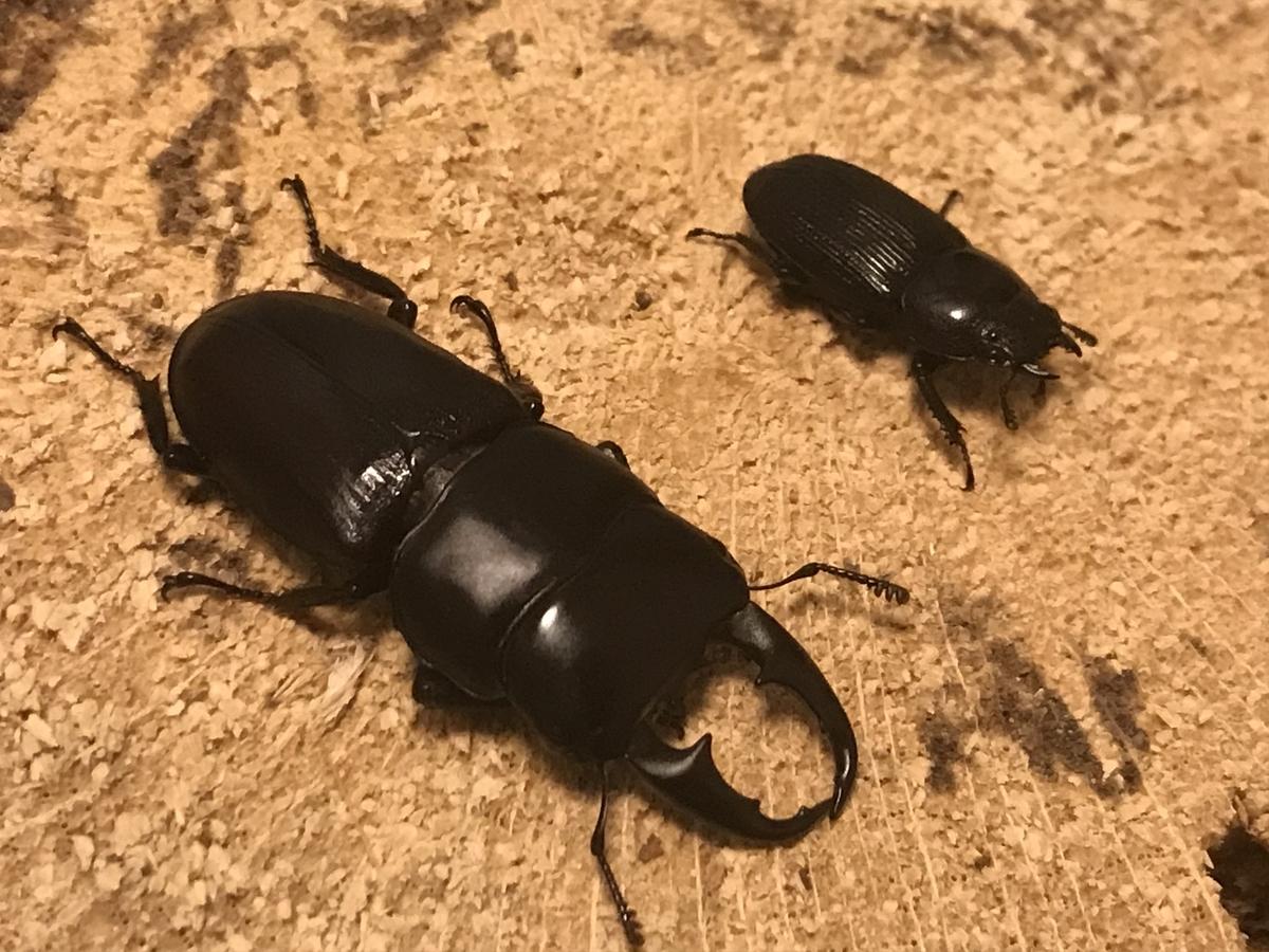 f:id:youwanna-beetles:20191112224334j:plain