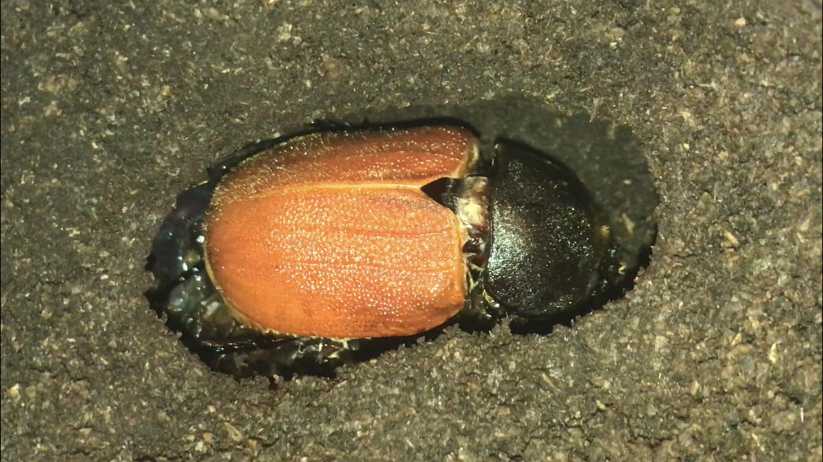 f:id:youwanna-beetles:20191116160125p:plain