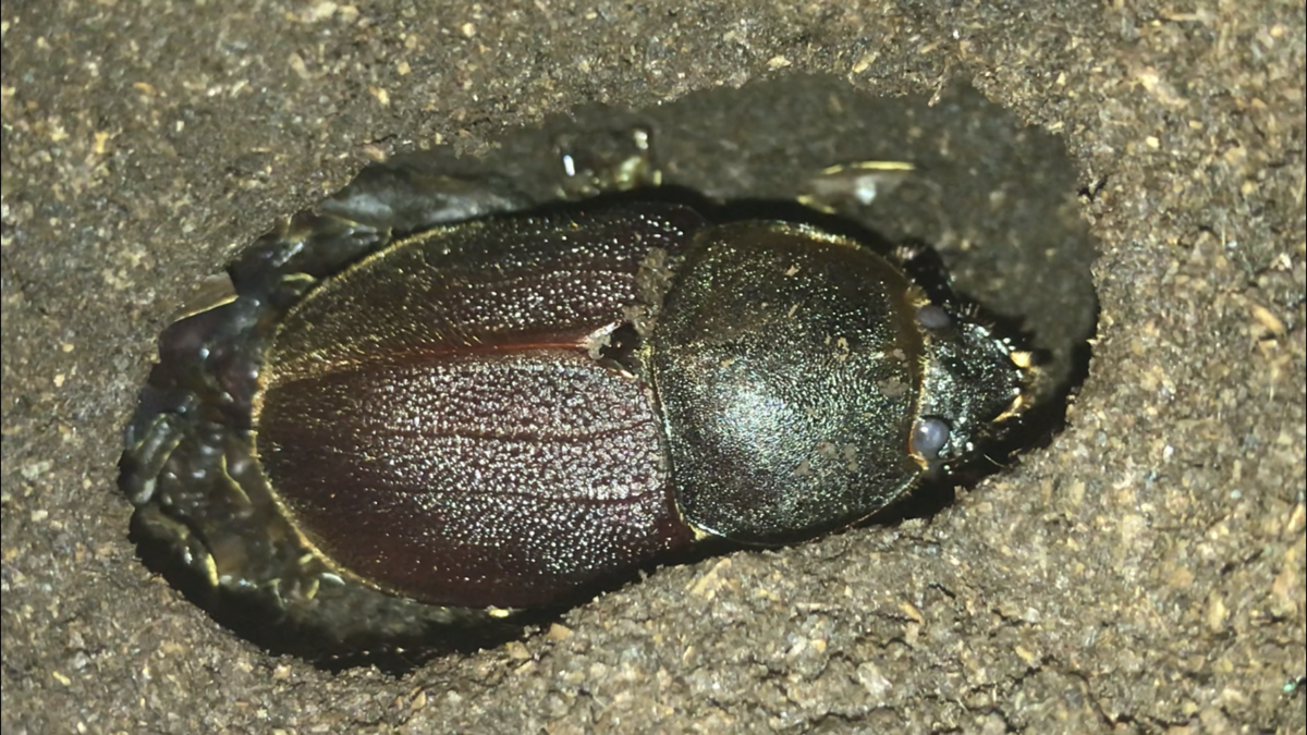 f:id:youwanna-beetles:20191116160223p:plain