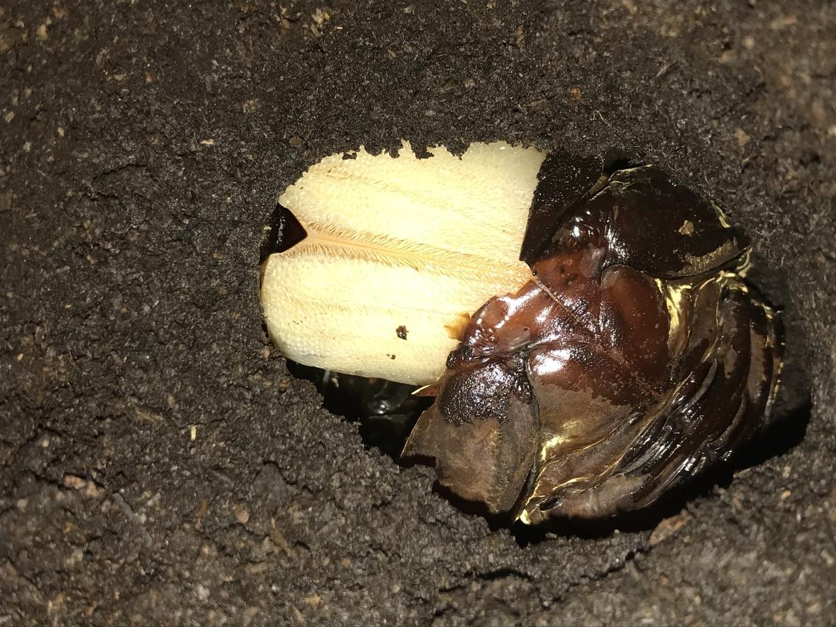 f:id:youwanna-beetles:20191116184126j:plain
