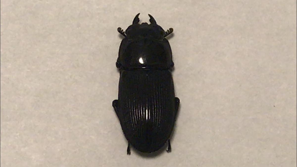 f:id:youwanna-beetles:20191124153651p:plain
