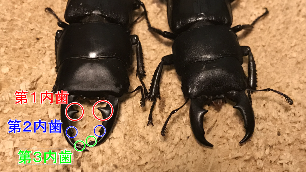 f:id:youwanna-beetles:20191125182057p:plain