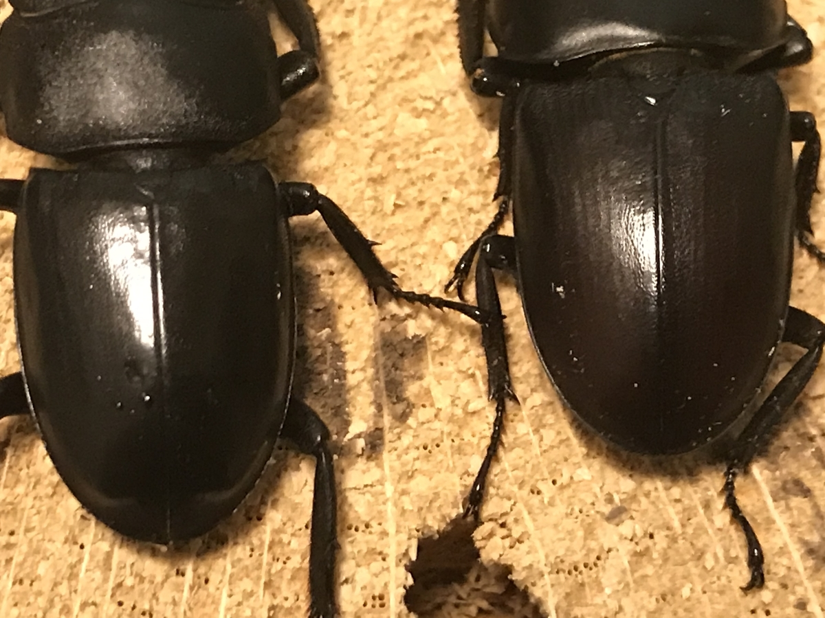 f:id:youwanna-beetles:20191125182413j:plain