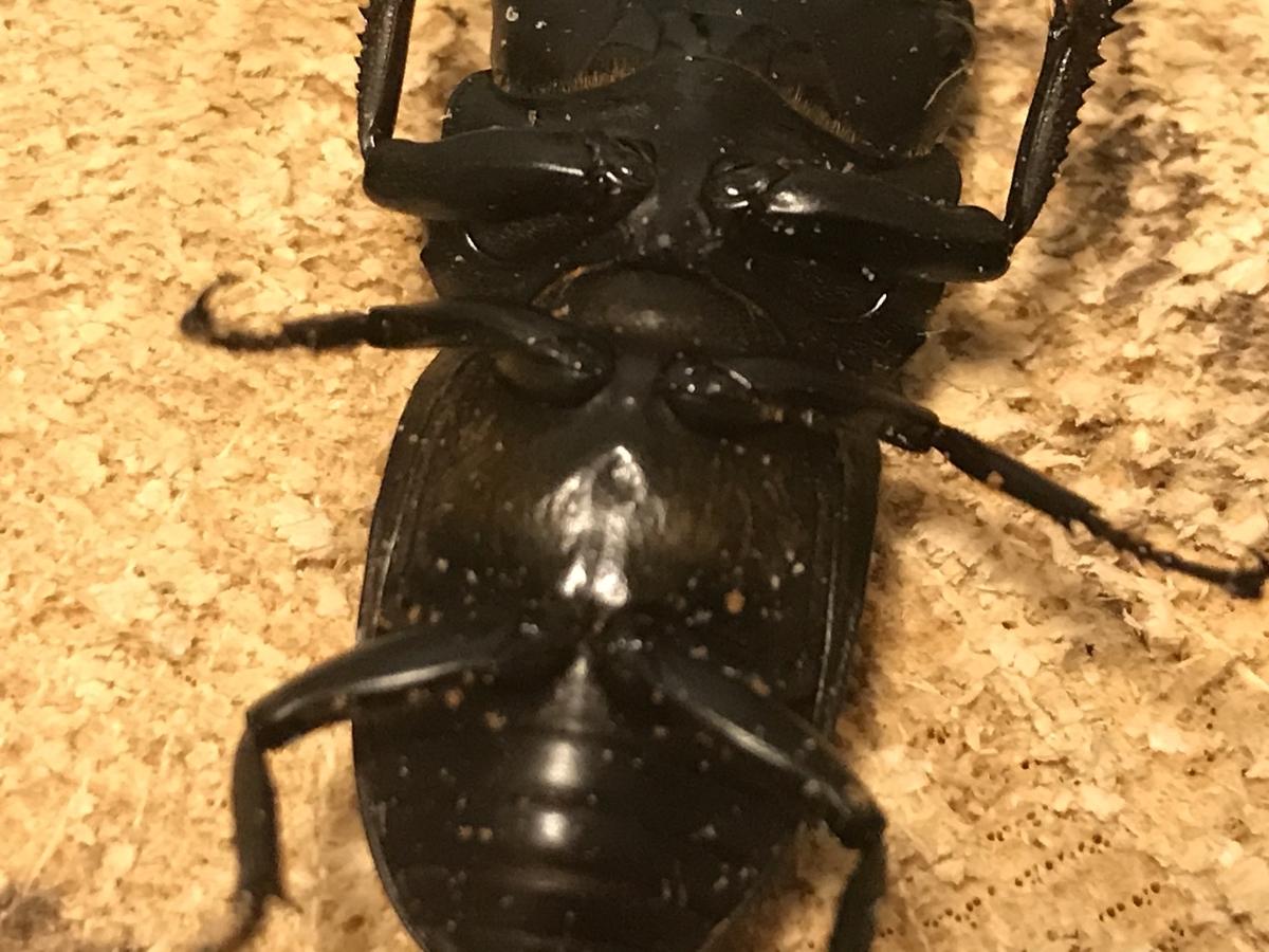 f:id:youwanna-beetles:20191125183732j:plain