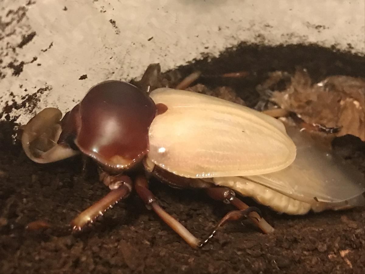 f:id:youwanna-beetles:20191203173138j:plain
