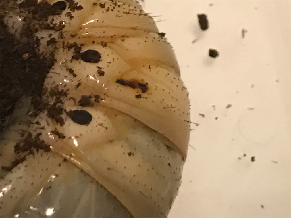 f:id:youwanna-beetles:20200106233150j:image