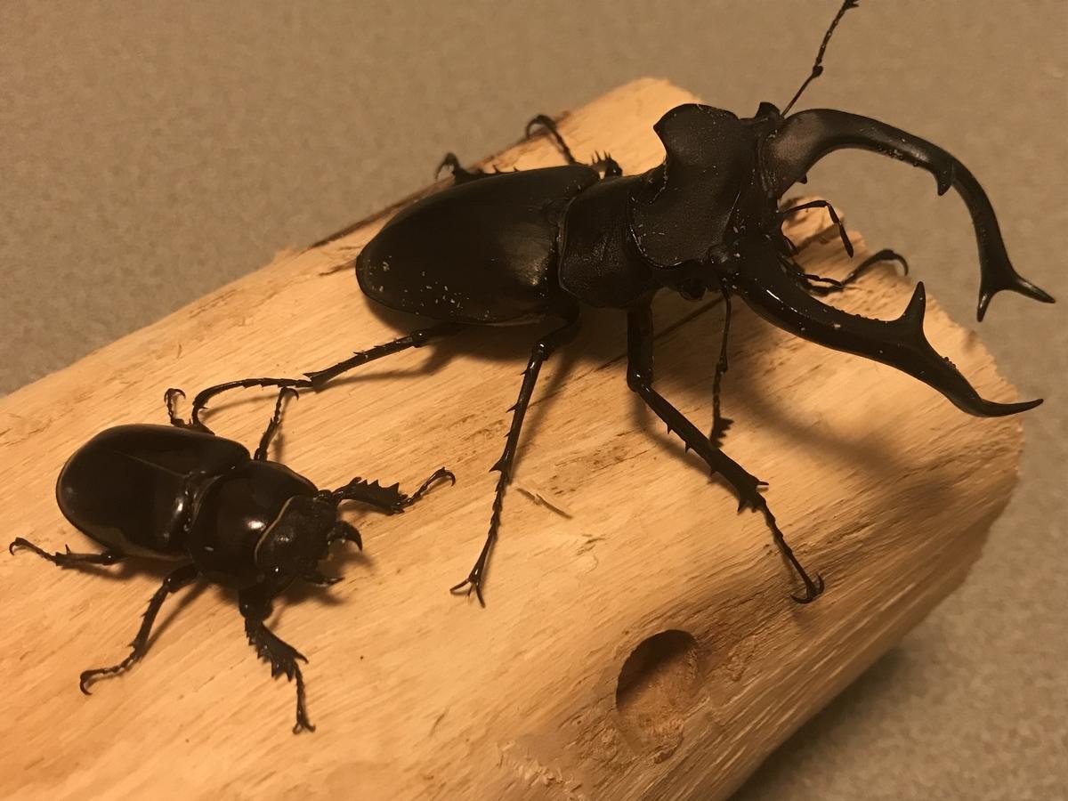 f:id:youwanna-beetles:20200229185513j:plain