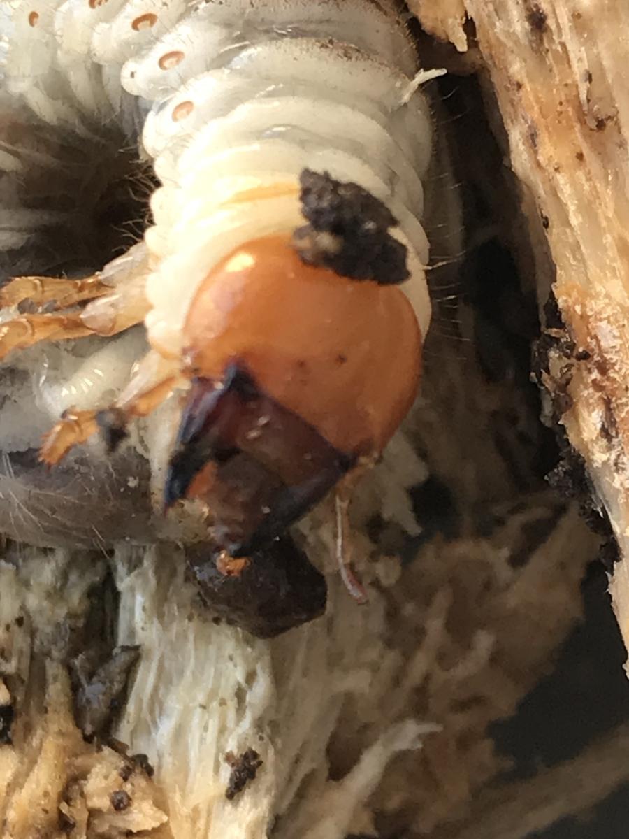 f:id:youwanna-beetles:20200404145933j:plain