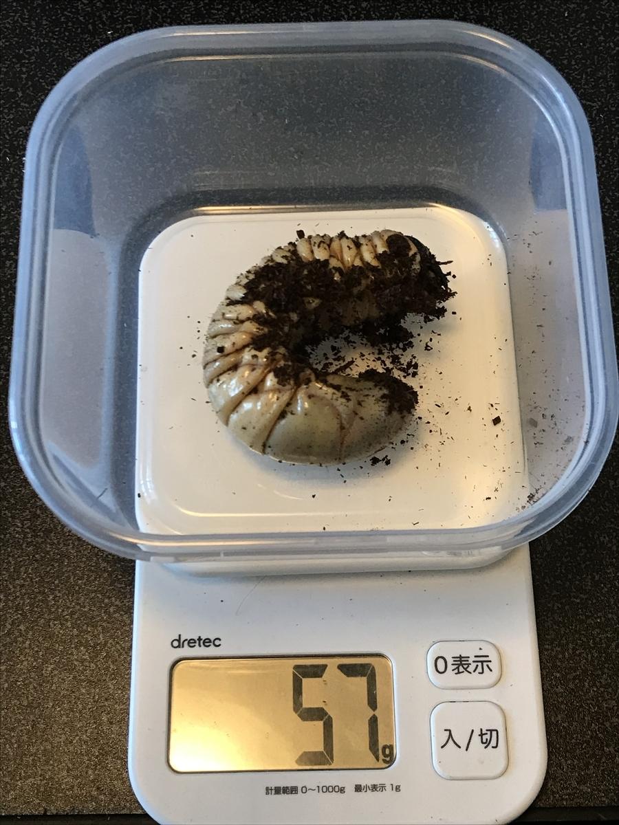 f:id:youwanna-beetles:20200520180117j:plain