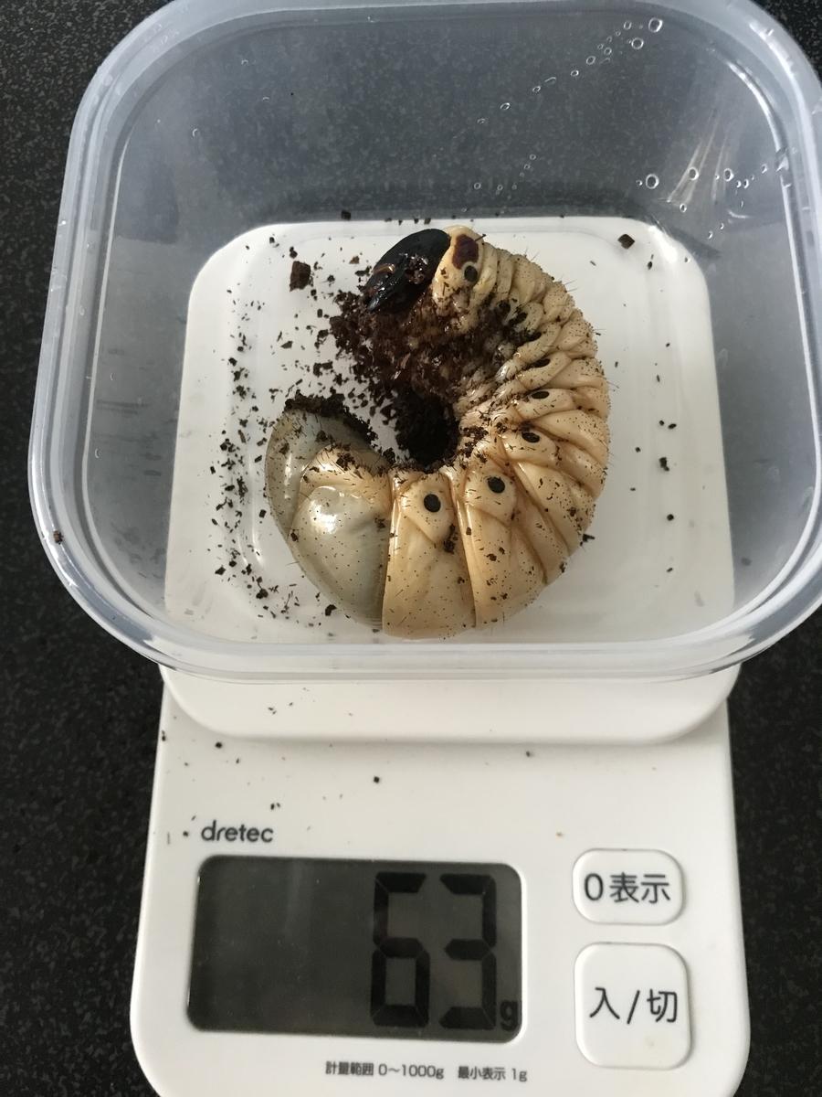 f:id:youwanna-beetles:20200520180140j:plain