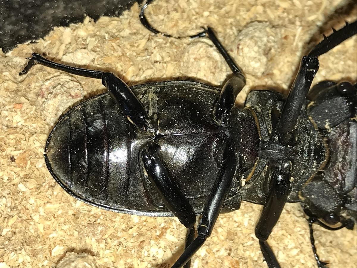 f:id:youwanna-beetles:20200606170425j:plain