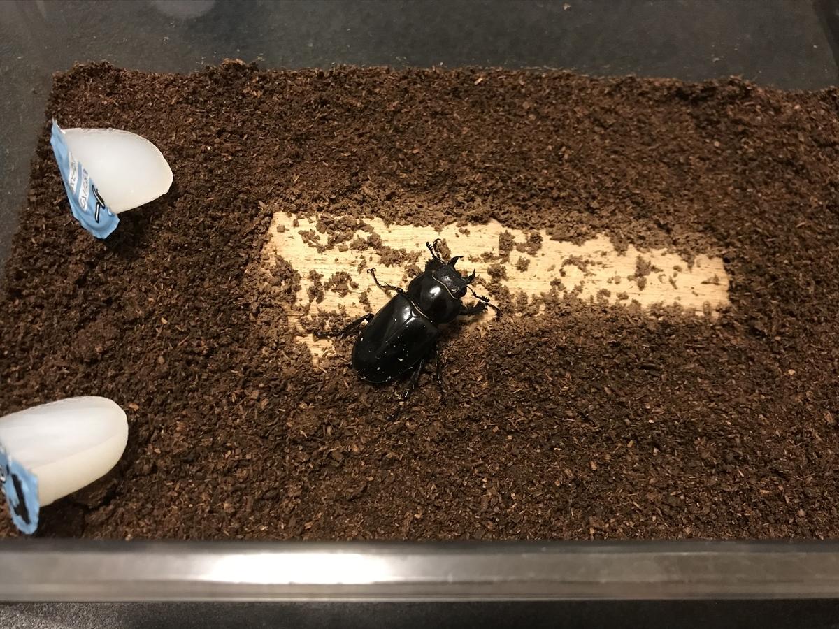 f:id:youwanna-beetles:20200612141215j:plain