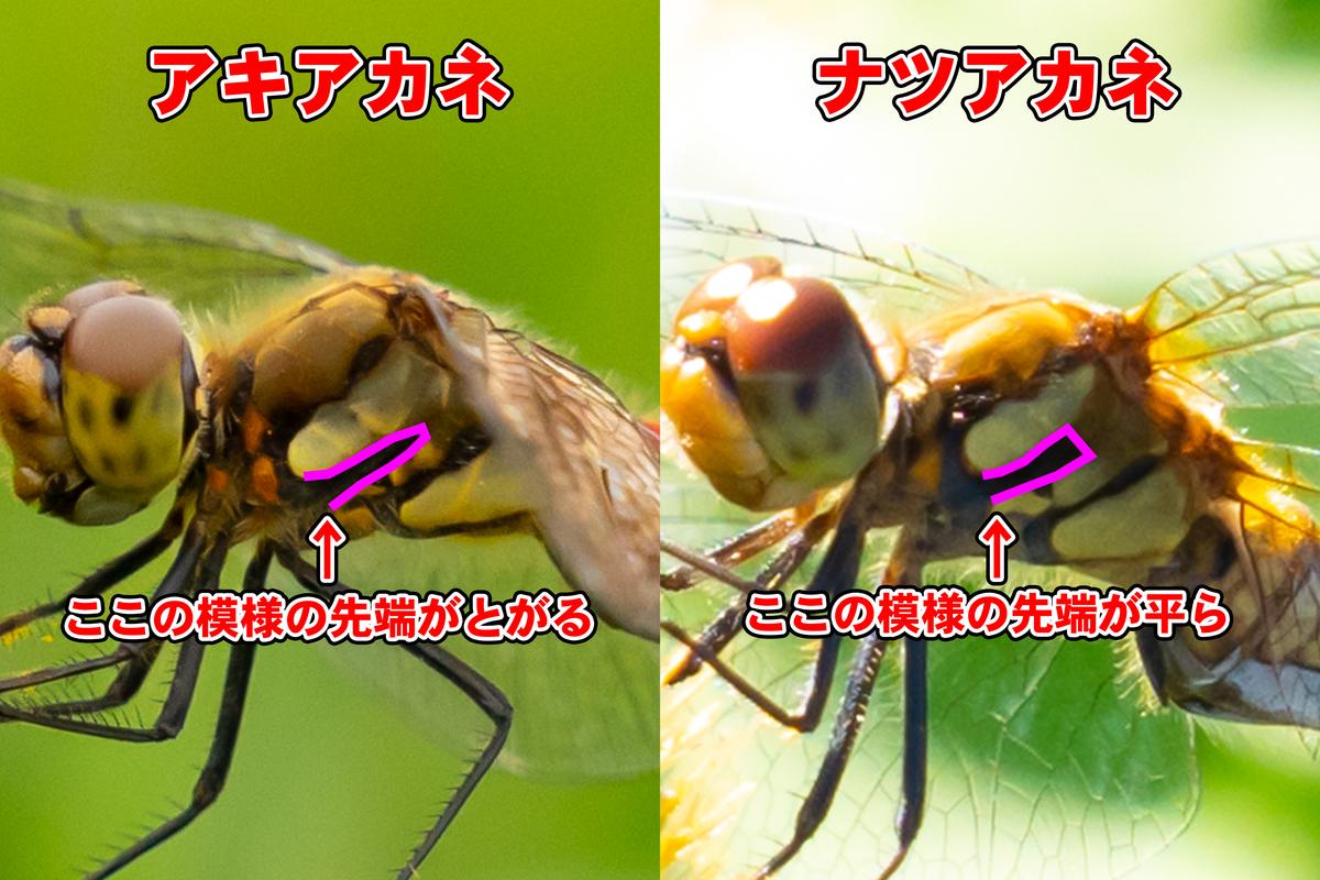 f:id:ysguchirou:20211018230253j:plain