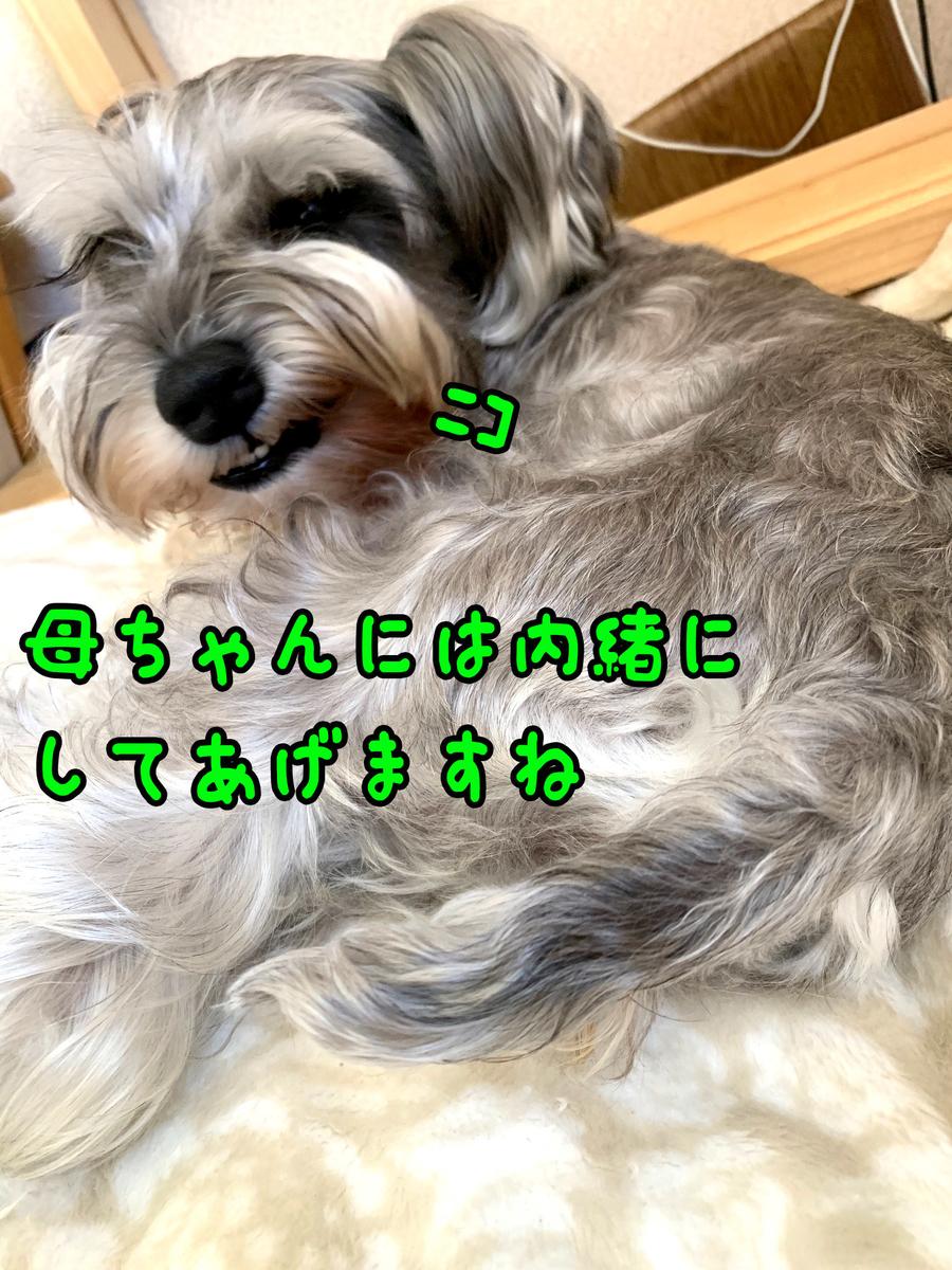 f:id:ysnyn658:20191223213256j:plain
