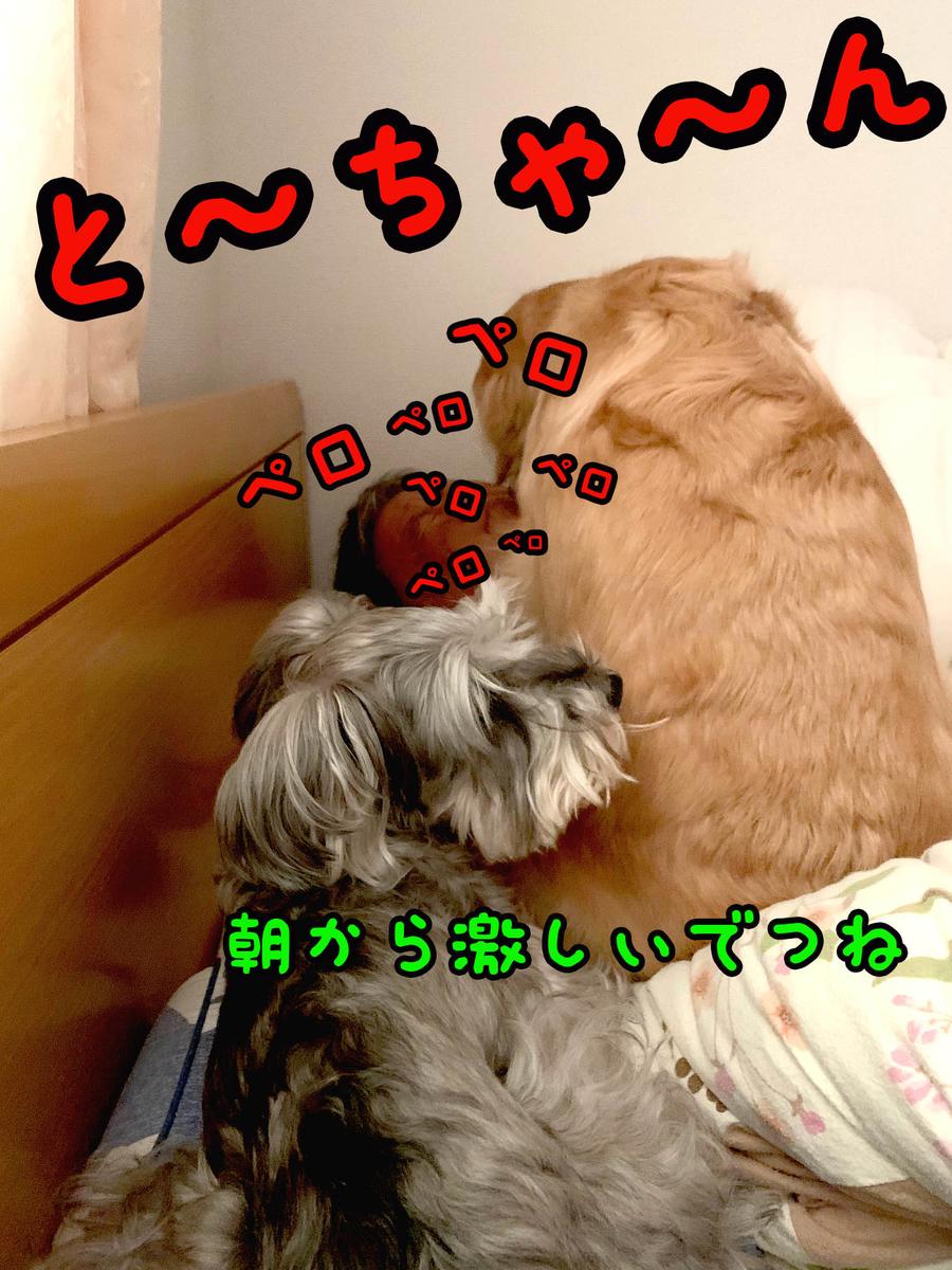 f:id:ysnyn658:20200102105006j:plain