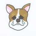dog_cry