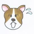 dog_ase