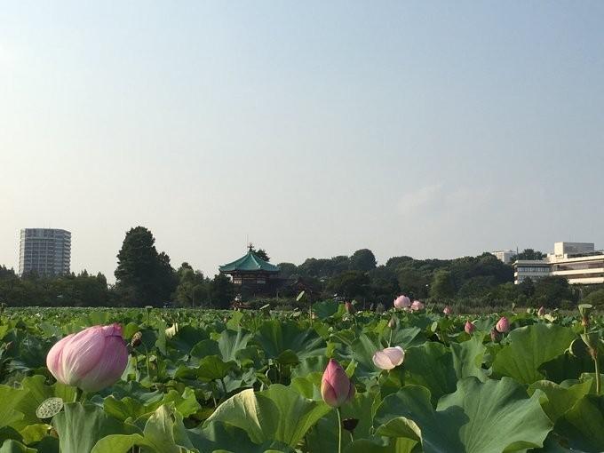 f:id:ytomiyama:20180805134125j:plain