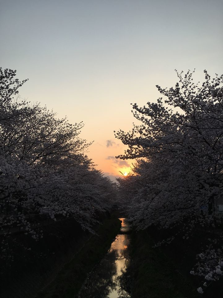 f:id:ytomiyama:20190420100630j:plain