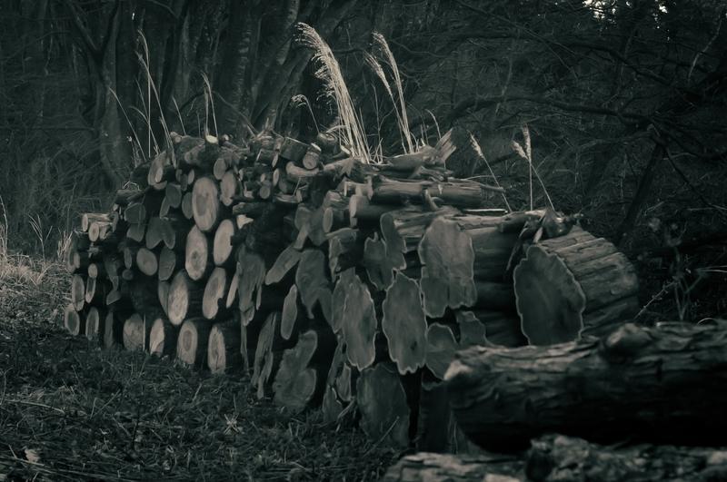 冬らしい枯れた草木の中重量感のある丸太が積み上がってます。白黒写真
