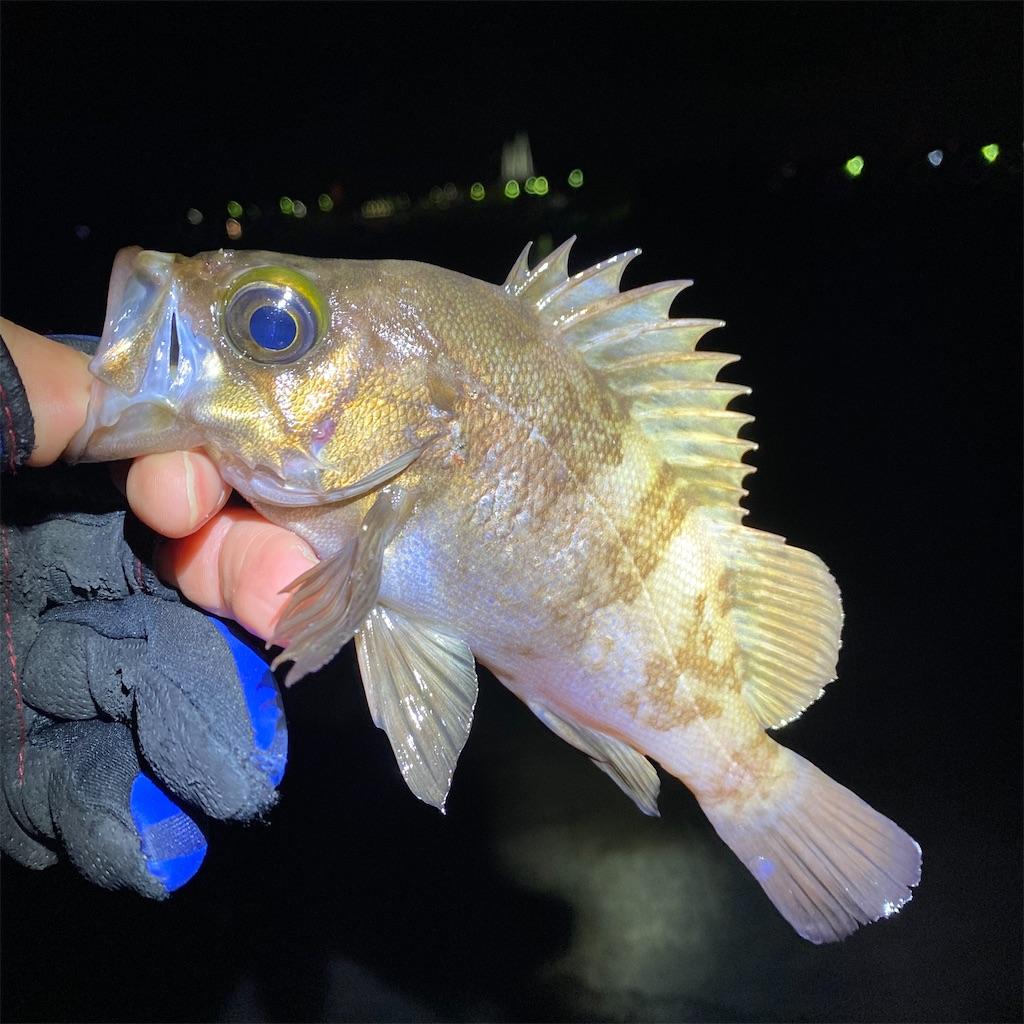 f:id:yu-kin-fishing:20200315022307j:plain