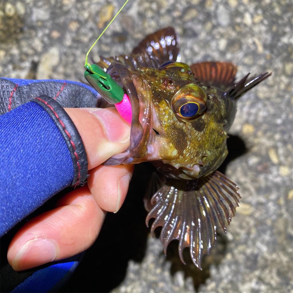 f:id:yu-kin-fishing:20200315024321j:image