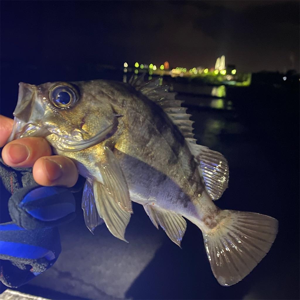 f:id:yu-kin-fishing:20200316221646j:image