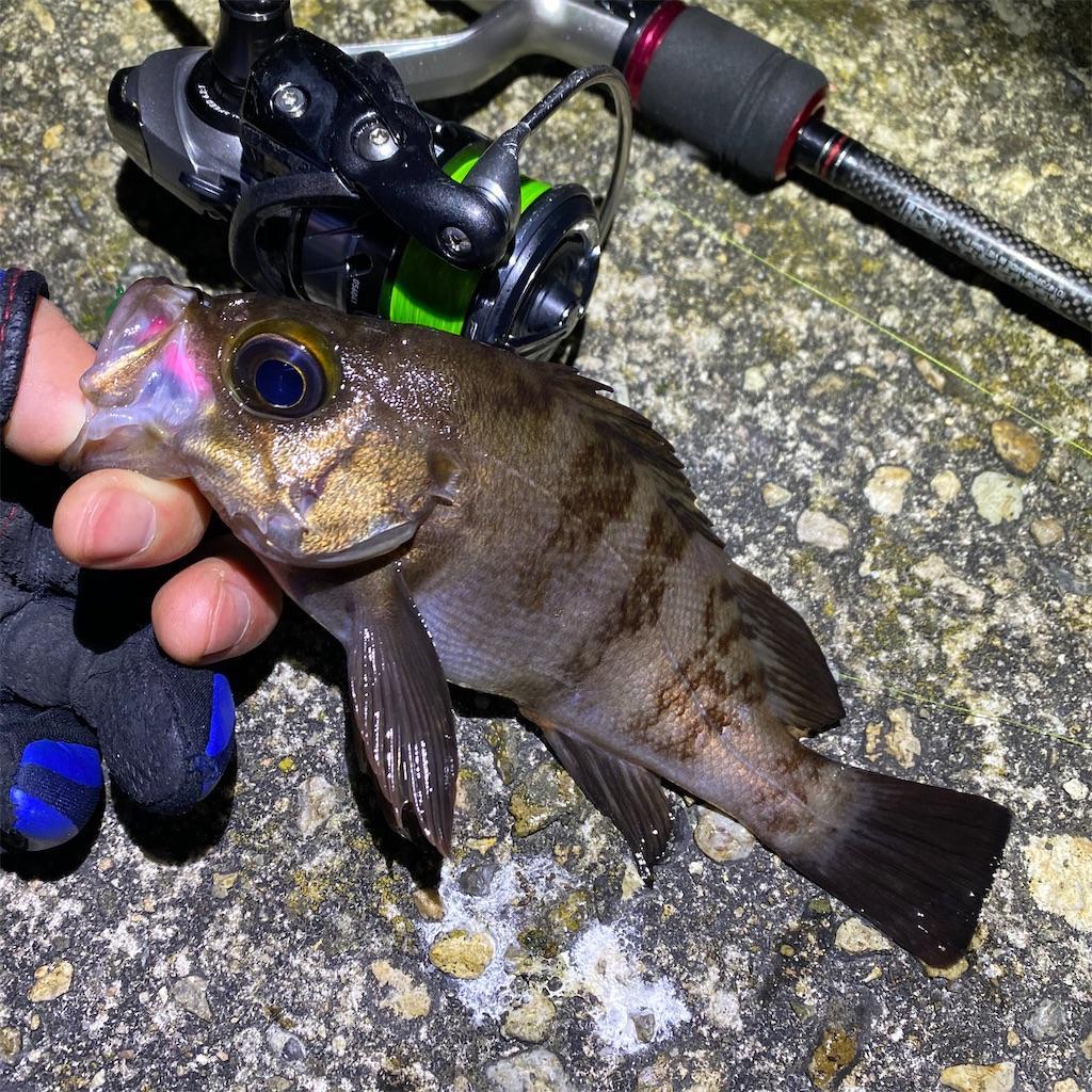 f:id:yu-kin-fishing:20200319102849j:image